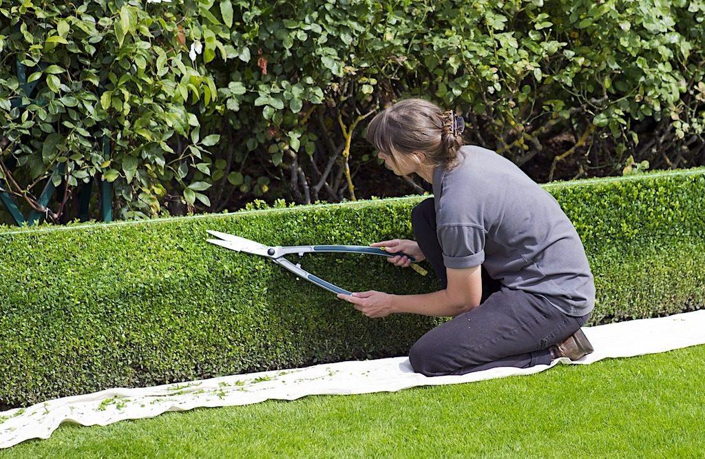 Informationen rund um die Grünanlagenpflege zusammengetragen