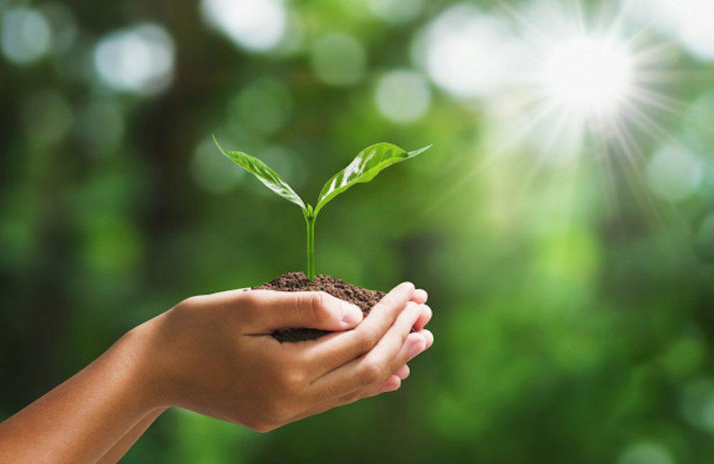 Umweltverantwortung in professionellen Reinigungsunternehmen
